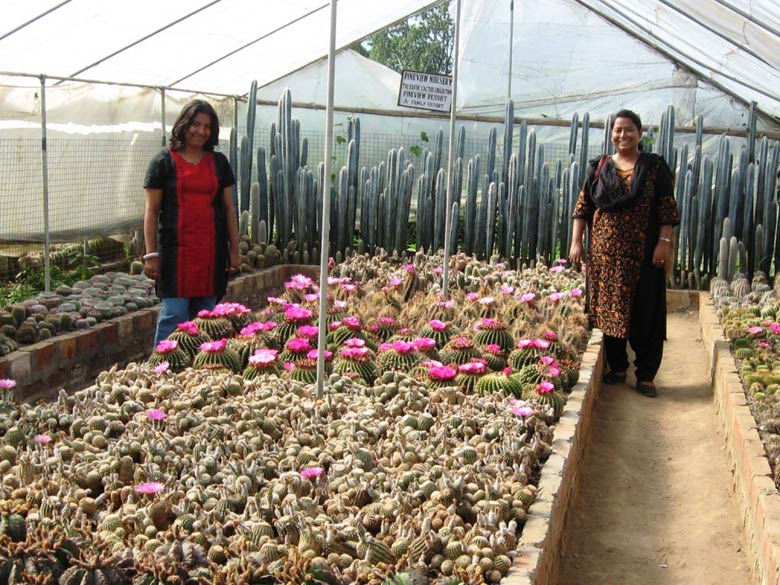 We visited the Pineview Cactus Nursery, about 2kms away from the town and were overwhelmed by the beauty of the Cactus Garden.This Garden is run by Mohan S Pradhan who has collected over 1500 species of Cactus from all across the Globe over the past 38 years