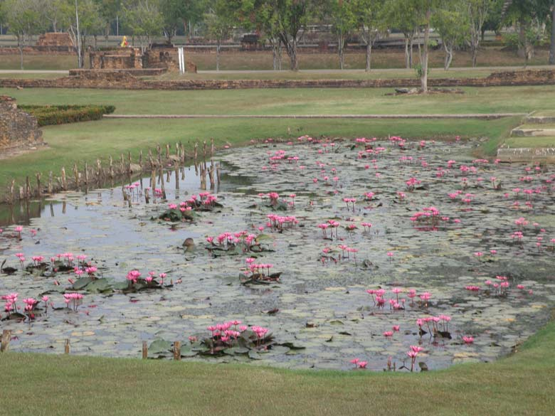 The Historical Park has very good roads, that are clean and well maintained lawns. As part of the Wat Mahathat complex is this waterbody. It is best to drive through the park on Cycle. Hiring charges 20-30 Baht per day.