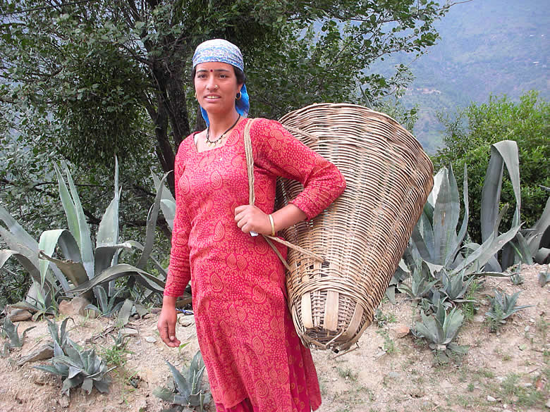 Typical Manali beauty. The cane basket on the back contains fruit that they pick - apples, apricots, berries