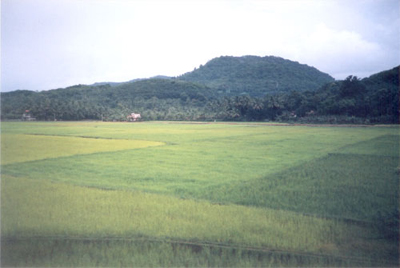 Paddy Fields on our way to Allepey