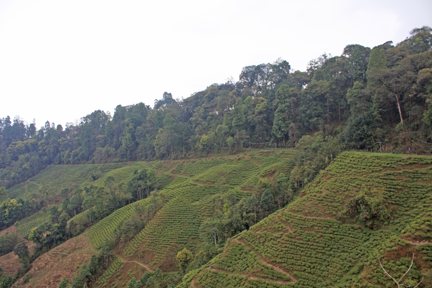 Tea Garden for which Darjeeling is equally famous.