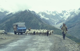 Rohtang Pass Shepherd