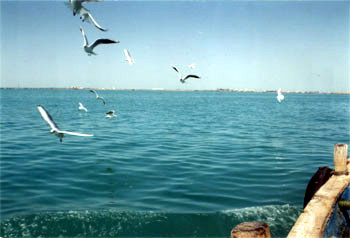 Sea Gulls surrounded our boat as we left Bet Dwarka because all of us were feeding them with grains.