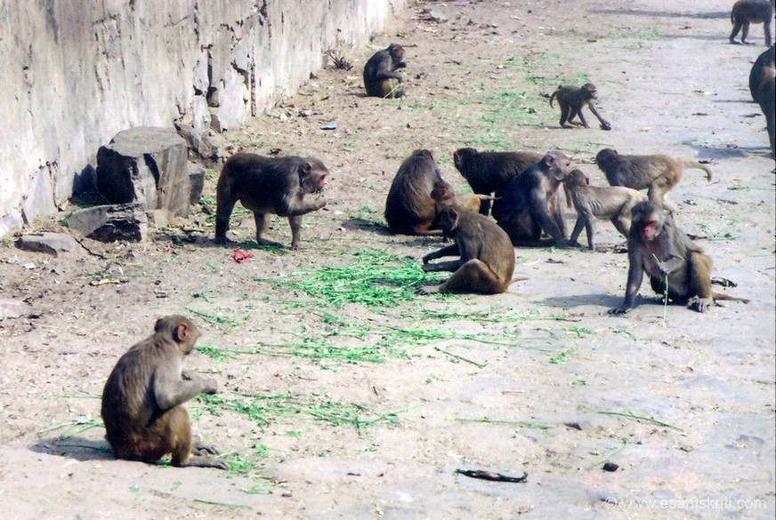 Route has monkeys on all sides. In order to ensure they stay away keep a few packets of chana with you.