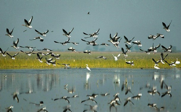 Birds at Nal Sarovar Sanctuary.