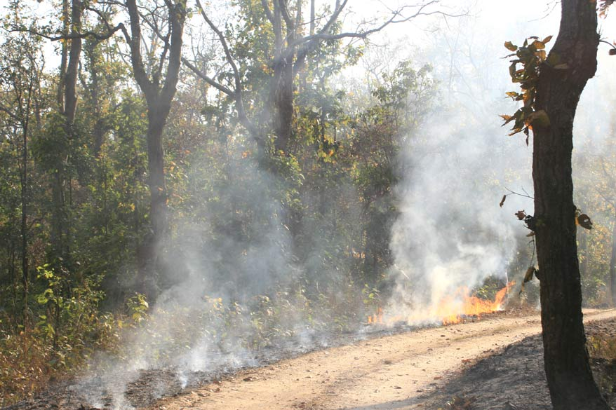In order to prevent the spread of forest fires, the park management create `Fire Lines` (narrow zones where no dead foliage is available to burn) by burning off dead vegetation in a controlled manner.