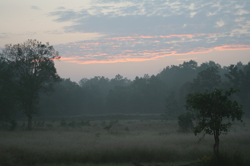 Sunrise in Kanha. There are two slots for tiger sighting - Go in at sunrise and return by noon, or start mid afternoon and return by sunset. Kanha boasts of about 22 species of mammals. Some of the inhabitants of the park are the gaur, the largest of the world`s cattle, the sambar,the largest Indian deer; and the chausingha, the only four-horned antelope in the world.