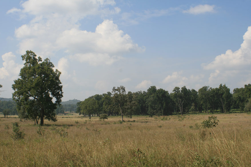 Kanha meadow. Important to preserve the environment. Kanha is closed during the monsoon. The Park came into being in 1955.