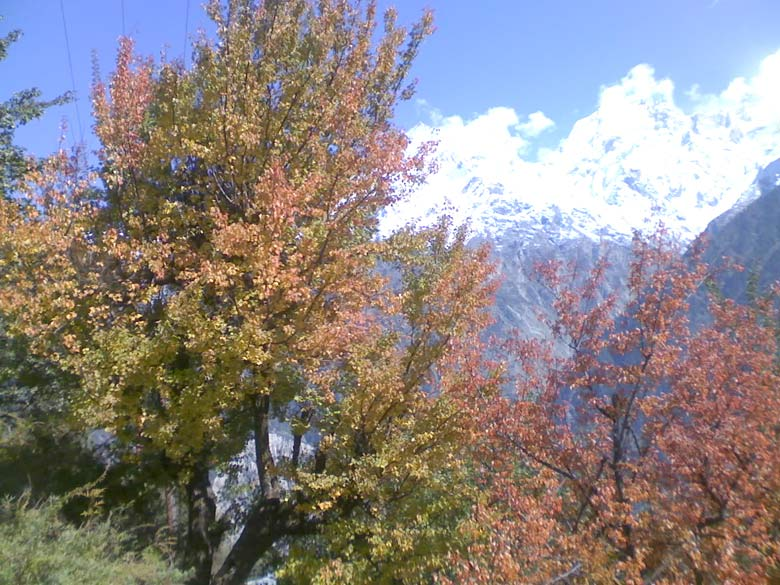 Late autumn colours of Kalpa, overlooking shifting clouds above the Kinnaur Kailas range.
