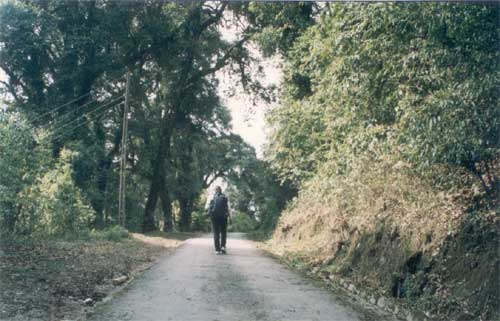 The long and lovely trek to the Pema Yangtse monastery, Sikkim s largest is past a beautiful tree lined avenue.