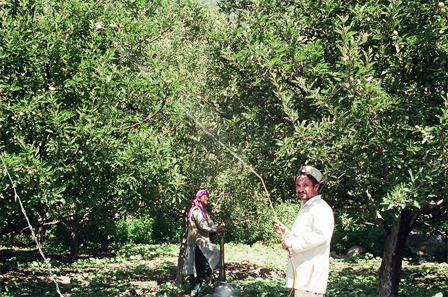 A husband wife team spraying insecticides to their Apple Orchard.