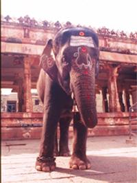 Hampi Elephant