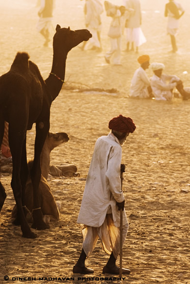 Villager walking across the camel ground.