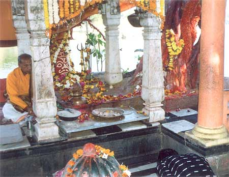Siddhavat Mandir: As there is glory of the Ashayarat in Prayag, Boudhvat in Gaya and Vanshivat in Vrindavan and Panchavata of Nasik just like that Siddhvat is a famous place of pilgrimage in Ujjain. According to tradition, all these trees are immortals & worshipped as Kalpniksha. It is an open air temple on the banks of the river Shipraji. A thread is tied for fulfillment of desires to the tree that you see in the picture.