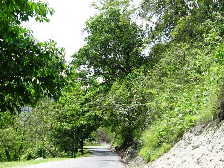 The road was well maintained and the surroundings lush green, making the 4.5 hr drive absolutely refreshing . Cars can be booked either from the station or arranged by your hotel.Vehicles on cost sharing basis are also available.