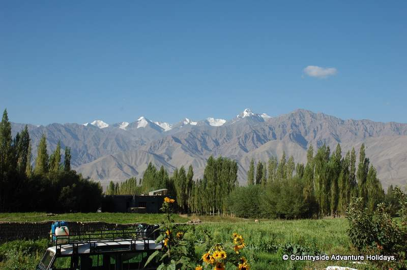 You see view from Leh. Left to right last snow peak is Stok Kangri. The base camp is two hours drive from Leh. Height is 6,120 metres. It takes six days Leh To Leh. App cost Leh to Leh is app Rs 40,000/. Some people do the trek in 2 days but for others it takes time to acclamitize. Trek is 26 kms but because of steep increase in altitude one needs to go slowly.