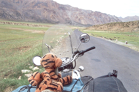 Emily's lucky mascot called Tiger enjoying the view. This Tiger has traveled about 20,000 kms on a bike.
