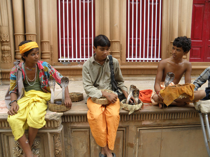 Met these snake charmers outside the Radha Ballabh temple entrance. Inspite of it not being Nag Panchami day their liveliness, energy and positive attitude convinced me to give them Rs 10/ each for milk for Nag Devata.