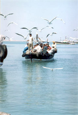 This is the sort of boat that ferried us from Okha to Bet Dwarka. Sea gulls galore.